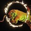 Цирки в Долматовском