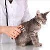 Ветеринарные клиники в Долматовском